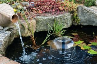 Garden Water Features and Fish – Basic Tips You Should Know About