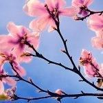 It's spring and the property market's blooming