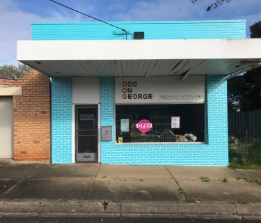 Booming Dog Grooming Business