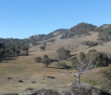 """Bindallah"" Warlands Creek Rd Blandford. Entry level grazing."